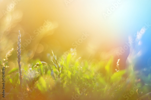 Poster Printemps Vintage photo of grass field in sunset. summer colorful backgrou