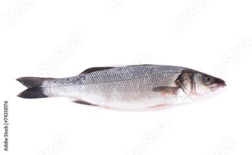 Poster Fish Seabass close up.