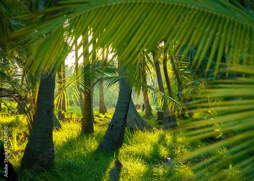 palmowy-las-tropikalny-z-ogromnymi-liscmi-palm-na-pierwszym-planie