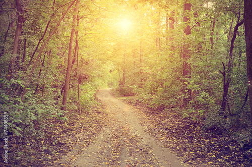 Spoed Foto op Canvas Weg in bos Pathway in the autumn forest