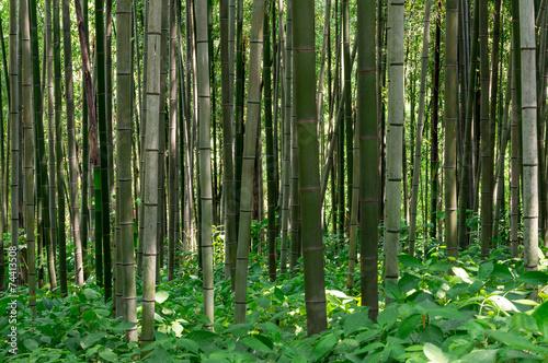 Foto op Plexiglas Bamboe Bamboo forest in Damyang, South Korea taken during summer.