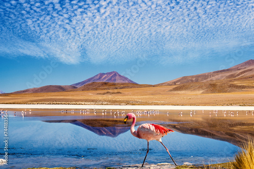 Photo sur Toile Flamingo Lagoon flamingo bolivia