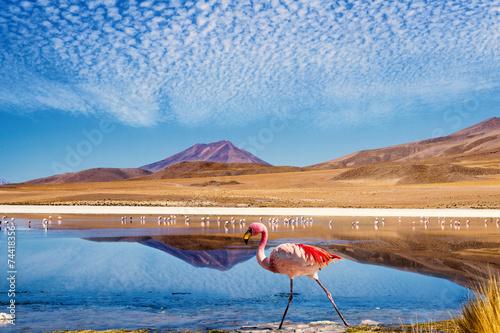 Foto auf Leinwand Flamingo Lagoon flamingo bolivia