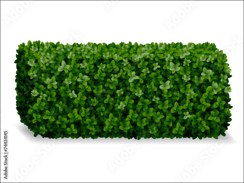 boxwood hedges ortho, decorative green fence Tableau sur Toile