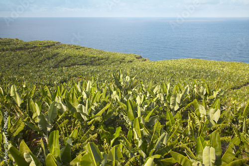 Banana plantation in La Palma. Spain