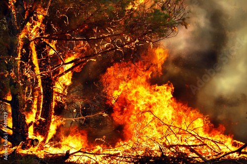 Tree on fire in forest fires #74491129
