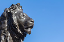 Lion Statue At The Queeen Vict...