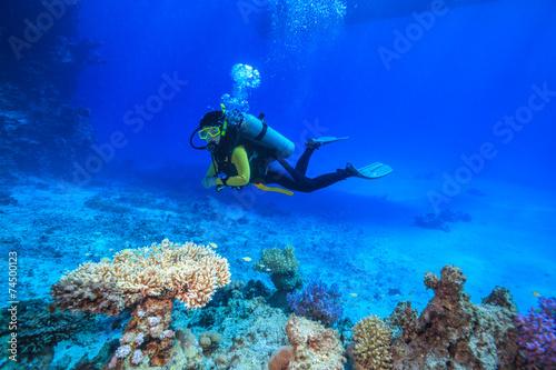 Stampa su Tela diver in the Red Sea
