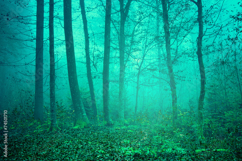 Stickers pour portes Vert corail Dreamy green color forest