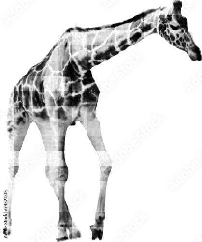 Photo  giraffe from black dots isolated on white