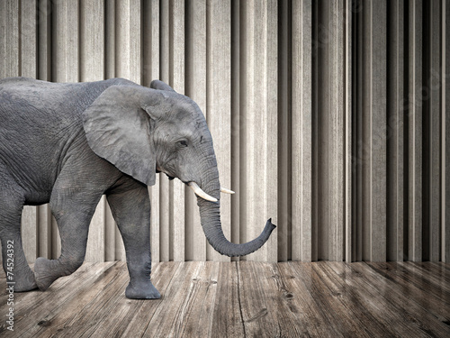 Obraz elephant in the room - fototapety do salonu