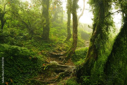 Fotografia  Selva Nepal