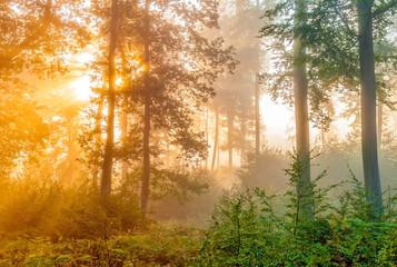 Panel Szklany Podświetlane Drzewa in the forest