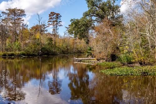 Fotografie, Obraz  Swamp