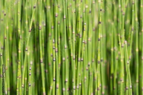 Foto op Plexiglas Groene green tree background