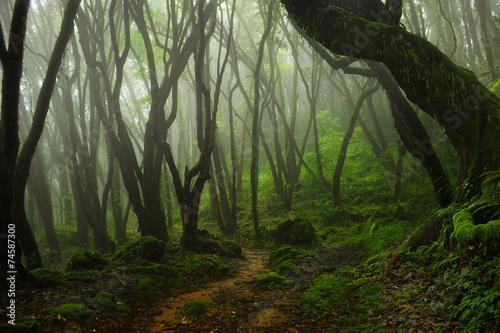 Fotografia  Bosque de Nepal