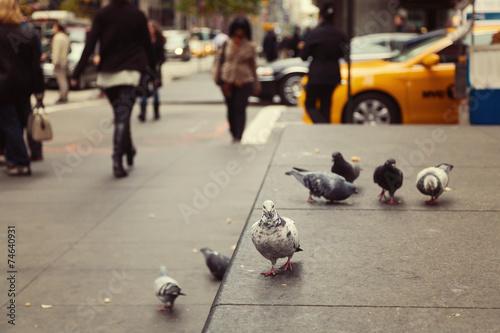 Keuken foto achterwand New York Pigeons on New York street, USA