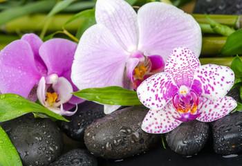 Obraz na SzkleWellness: Orchideen, Steine, Bambus und Wasser :)
