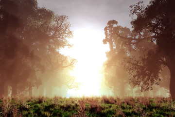 Obraz na płótnie Canvas Mysterious Magical Fantasy Fairy Tale Forest Sunset Sunrise 3D