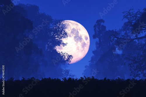 Fotografering  Mysterious Magical Fantasy Fairy Tale Forest at Night 3D art