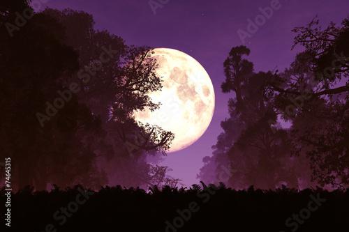 Mysterious Magical Fantasy Fairy Tale Forest at Night 3D art Billede på lærred