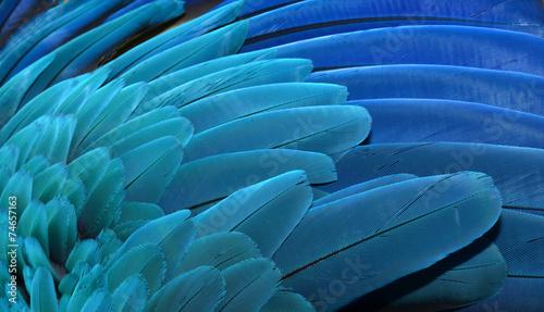Fototapeta Pióra na skrzydłach papugi ary, Karaiby do salonu
