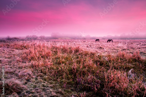 Candy pink horses grazing on pasture