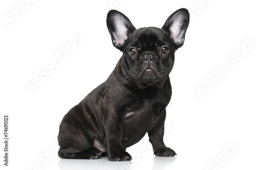 Stickers pour portes Bouledogue français French bulldog puppy on a white background