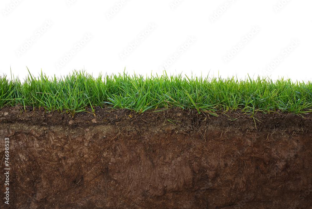 Fototapety, obrazy: Grass and soil