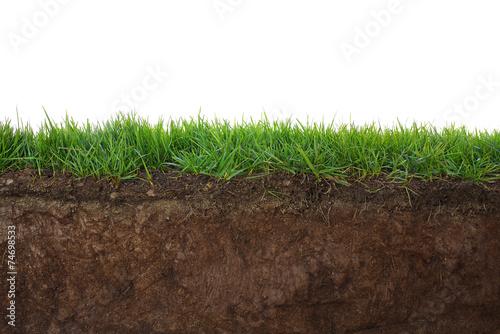 Grass and soil Slika na platnu