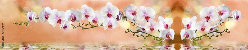 Fototapety, obrazy: орхидеи в воде на светло бежевом фоне