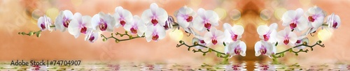 Fototapeta орхидеи в воде на светло бежевом фоне obraz