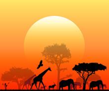 Sole, Savana, Animali, Elefanti, Giraffe, Skyline, Penombra