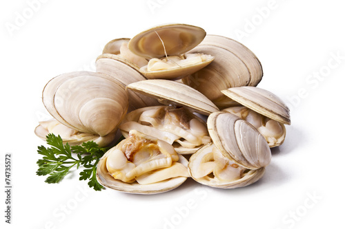Papiers peints Coquillage clams isolated on white background