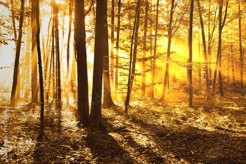 Foto op Plexiglas Landschappen forest