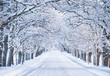 canvas print picture - Alley in snowy morning