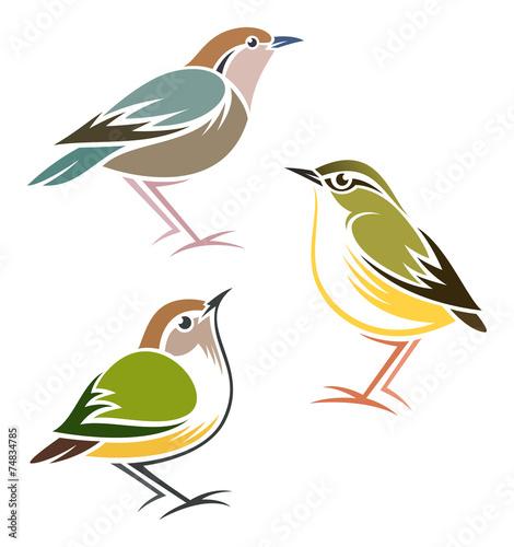 Photo  Stylized Birds - Rusty-naped Pitta, Rock Wren, Rifleman