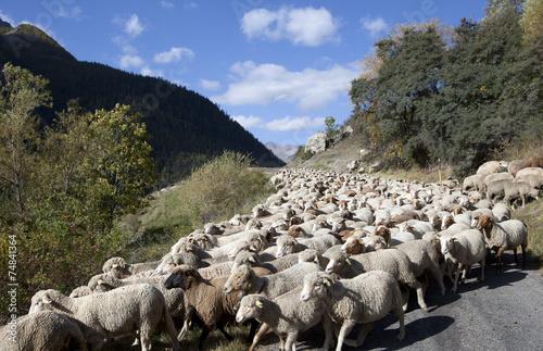 Fotografie, Obraz  Saison Berger, Alpes de hautes Provence