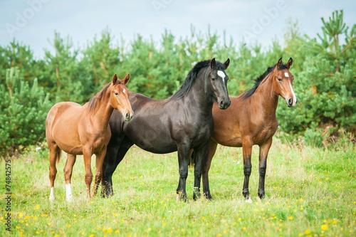 trzy-konie-stojace-na-pastwisku-w-lecie