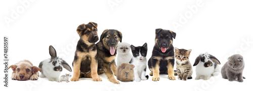 set of pets © Happy monkey