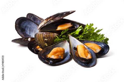mussels isolated on white background Fototapet