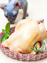 Sphynx Cat Sniffing Chicken Prepared For Roasting