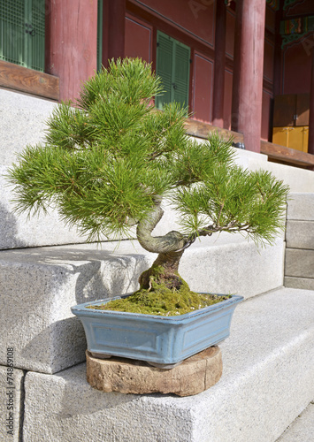 Bonsai tree in container on steps Poster