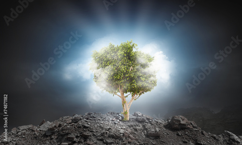 Fototapety, obrazy: Nature protection