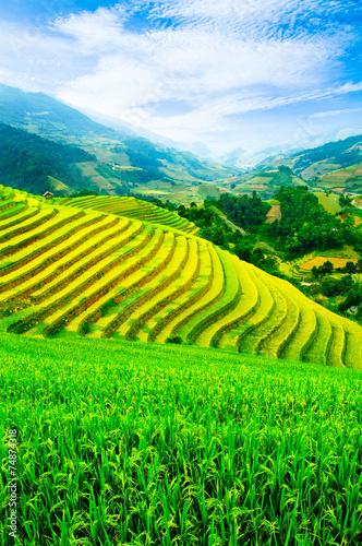 Fotobehang Rijstvelden Rice fields on terraces in vietnam