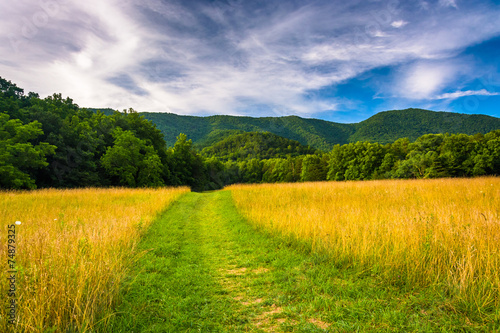 Field and mountains at Cade's Cove, Great Smoky Mountains Nation Wallpaper Mural