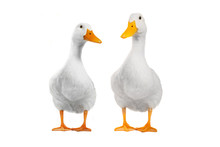 Two Duck