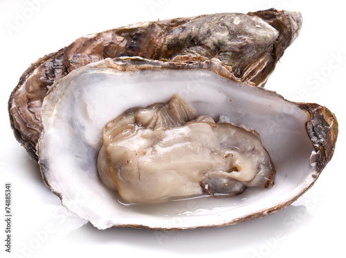 Raw oyster on a whte background. Canvas Print