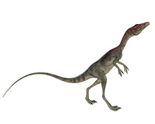 Compsognathus Dinosaur Walking...