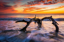 Tree And Waves In The Atlantic Ocean At Sunrise At Driftwood Bea